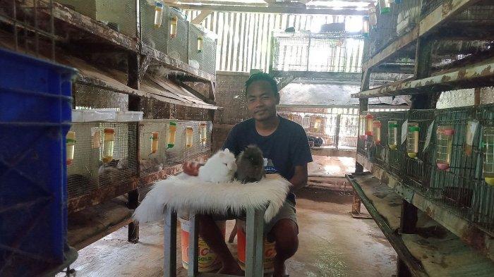 Nurdin sedang merawat kelinci hias di kandang miliknya, Desa Purbahayu, Kecamatan Pangandaran.