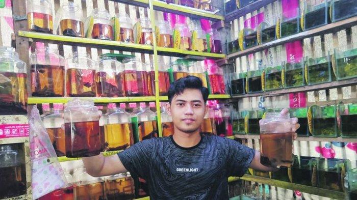 Mahasiswa yang Ingin Jadi Wartawan Ini dapat Jutaan Rupiah Sebulan Berkat Bisnis Ikan Cupang