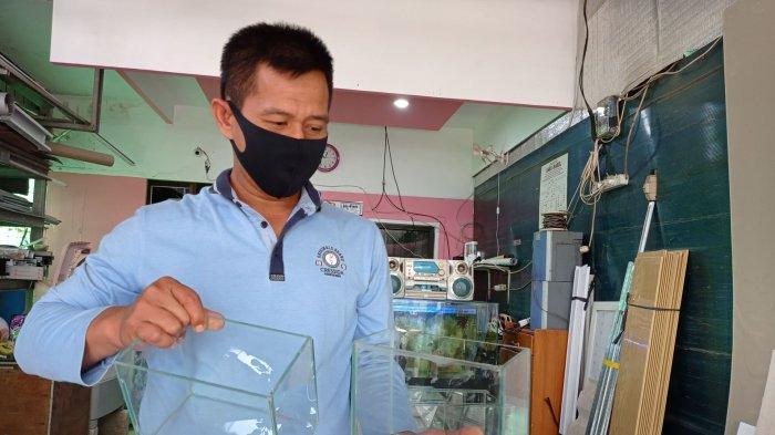 Bisnis Akuarium Mini, Berkah Tersembunyi di Tengah Pandemi, Omzetnya Jutaan Rupiah Sehari