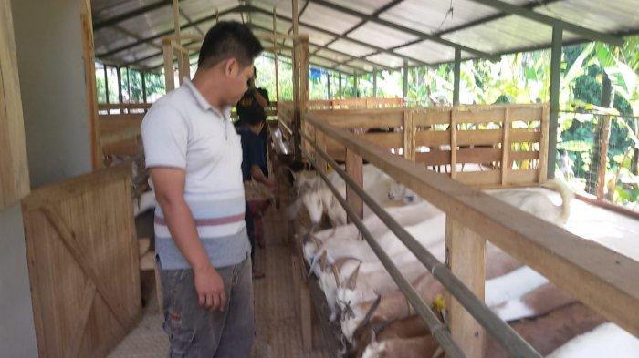 Yuda Yusuf Danial di petternakan kambing perah miliknya