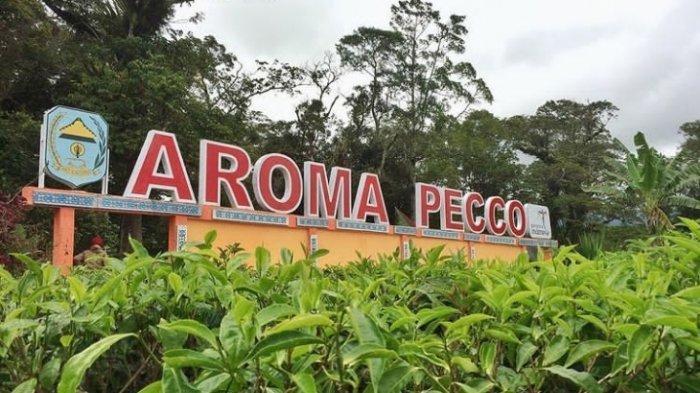 Aroma Pecco