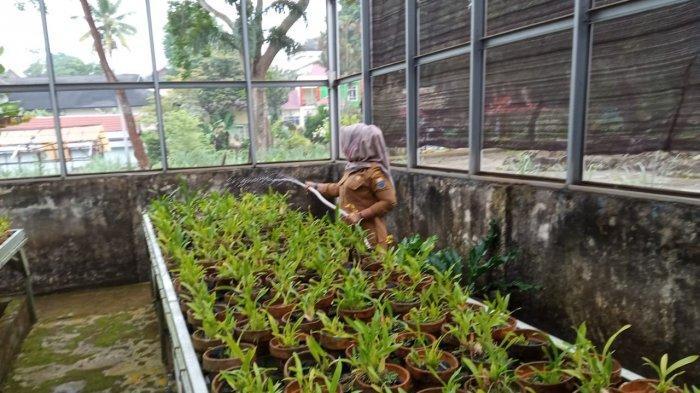 Taman Anggrek Sri Sudewi, menjadi satu destinasi wisata edukasi yang ada di Kota Jambi.
