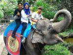 Yanti Mati, Kini Gajah di Taman Rimba Tinggal Satu, Alfa Namanya