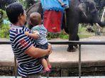 Asal Usul Yanti, Gajah Betina di Taman Rimba yang Sudah Mati