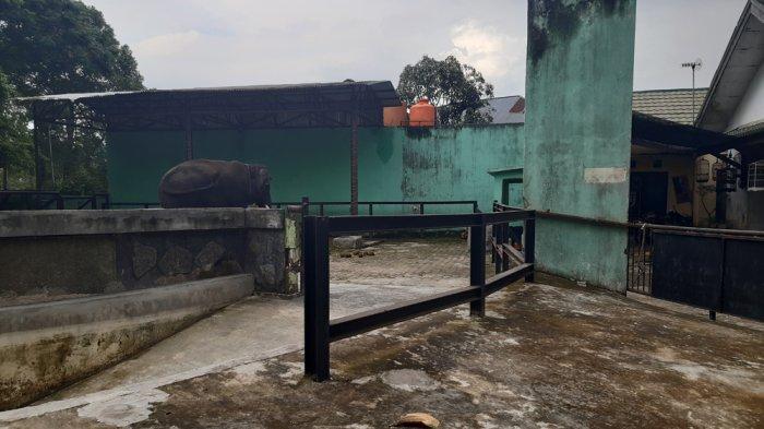 Libur Imlek, Taman Rimba Zoo Jambi Sepi Dari Pengunjung