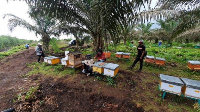 Peternakan madu di perbatasan Muaro Jambi dengan Tanjung Jabung Timur.