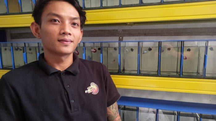Panut (24), pria muda yang fokus beternak ikan cupang sejak 2014