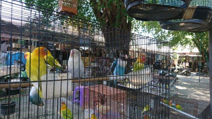 Lovebird Mendominasi Pasar Burung Karimata Semarang