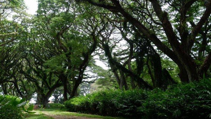 Wisata hutan de Djawatan Banyuwangi