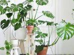 tips-budidaya-tanaman-hias-di-rumah.jpg