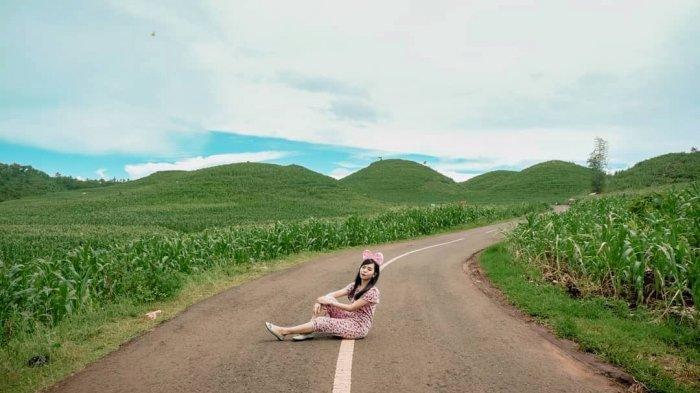 Bukit Teletubies Gunung Kidul Sedang Hijau, Waktu yang Tepat Berburu Foto