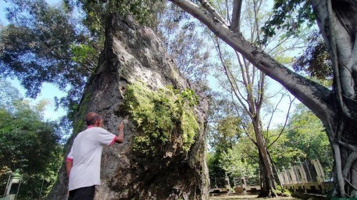 Cagar Alam Gunung Gamping Jadi Bagian Penting dalam Sejarah Berdirinya Keraton Yogyakarta