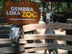 gembira-loka-zoo.jpg