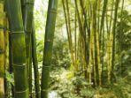 hutan-bambu-wanagama-1.jpg