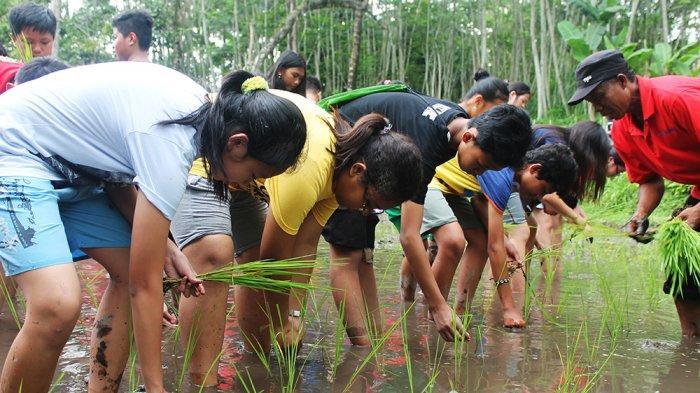 Para peserta kunjungan saat belajar menanam padi di desa wisata Pentingsari Sleman.