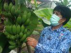 kebun-plasma-nutfah-pisang.jpg