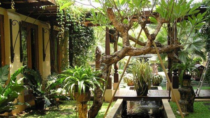 Tak Hanya Baik untuk Lingkungan, Menanam Pohon di Rumah Juga Bisa Menghemat Listrik