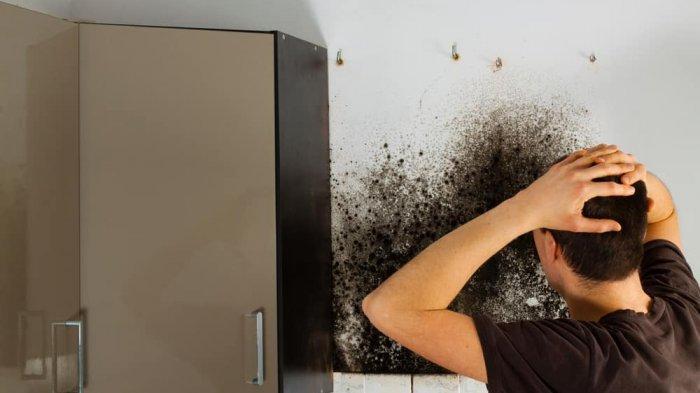 Hati-hati Jika Tembok Rumah Berjamur, Bisa Menyebabkan Masalah Kesehatan Serius