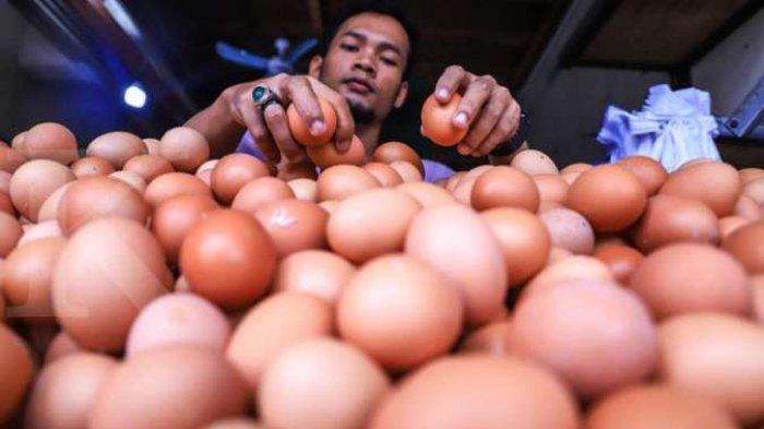 Tips Membeli Telur Segar, Jangan Sampai dapat Telur Lama dan Telur Busuk