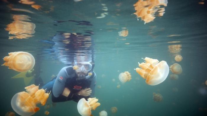 Uniknya Danau Kakaban, Tempat Ubur-ubur Cantik Tanpa Sengat
