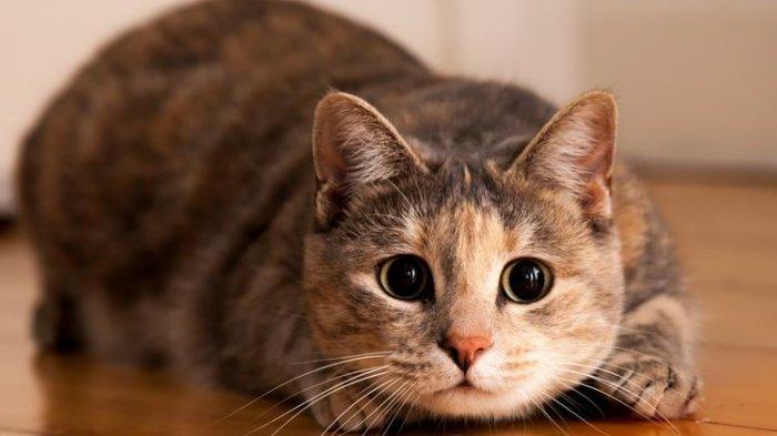 Kucing Punya 9 Nyawa dan Sangat Jarang Terluka, Ini Alasannya