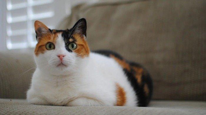 Benarkah Kucing Bisa Memprediksi Gempa Bumi? Berikut Faktanya