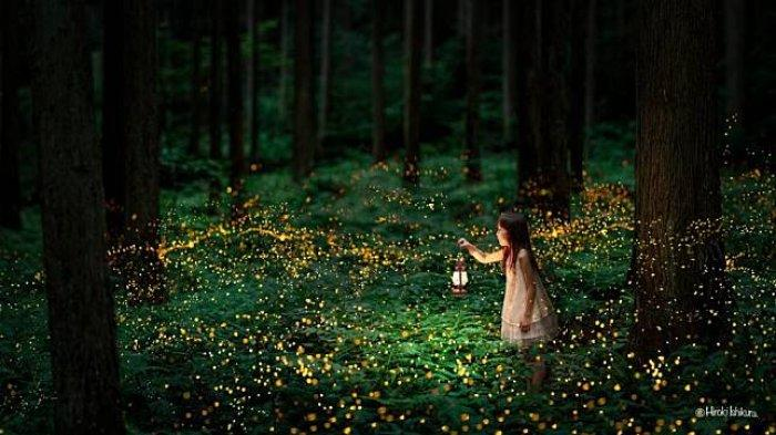Akibat Cahaya Lampu Buatan, Kunang-kunang Terancam Punah