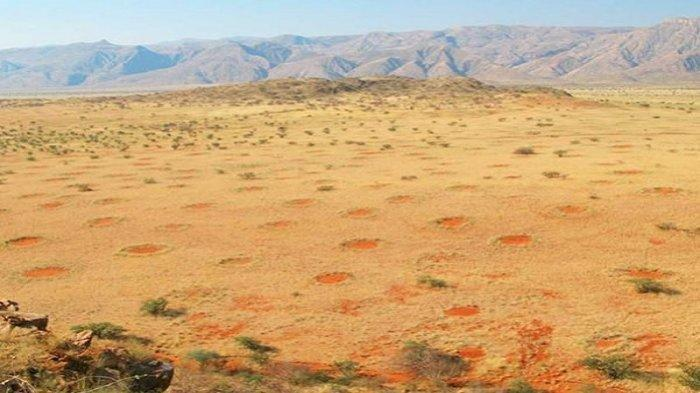 Lingkaran Peri, Fenomena Aneh yang Hanya Terjadi di Satu Tempat di Bumi Ini