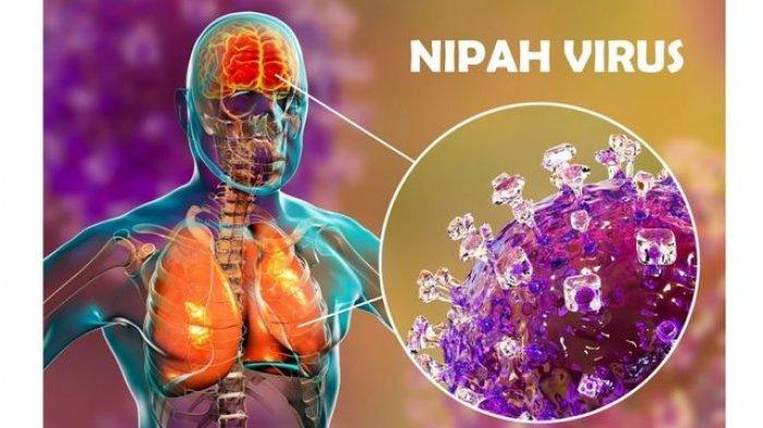 Virus Nipah Pertama Kali Ditemukan di Pulau Kalimantan, Berpotensi Menjadi Pandemi