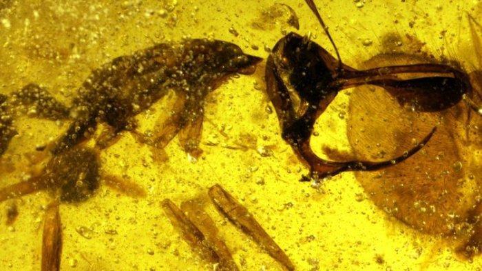 Semut Neraka Benar Ada, Tanduknya Terbuat dari Zat Besi