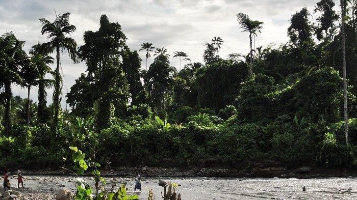 Suku Togutil di Maluku Utara, Mendadak Muncul dan Memanah Warga