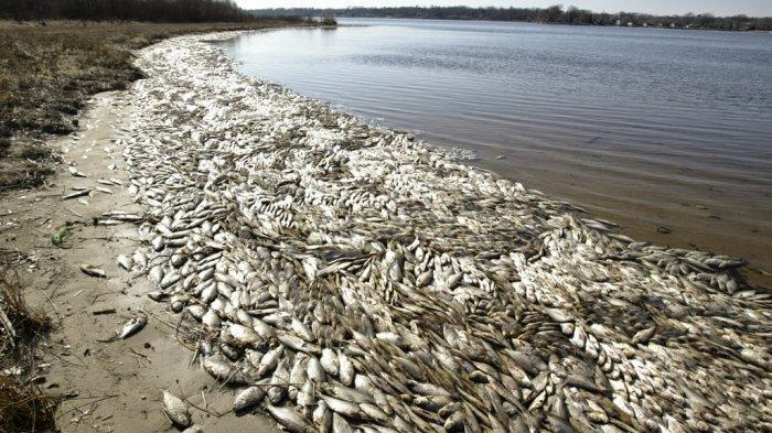 Zona Mati Semakin Meluas, Jutaan Ikan Mati,  Apa Penyebabnya?