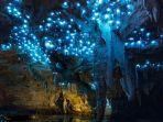 gloworm-islandia.jpg