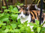 kucing-3.jpg