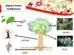 organ-tumbuhan.jpg