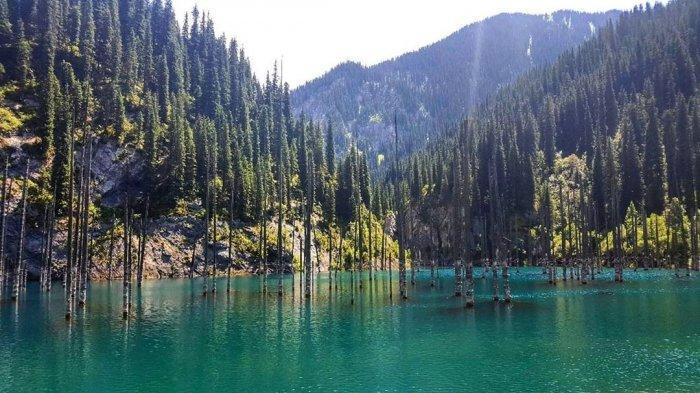 Ada Pohon Cemara yang Mencuat dari Dalam Air, Ini Fakta Unik Danau Kaindy di Kazakhstan