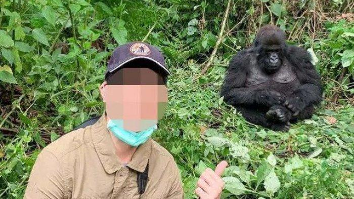 Seorang pria tersenyum saat selfie dengan seekor gorila awal bulan ini di Taman Nasional Virunga dengan masker menutupi dagunya.