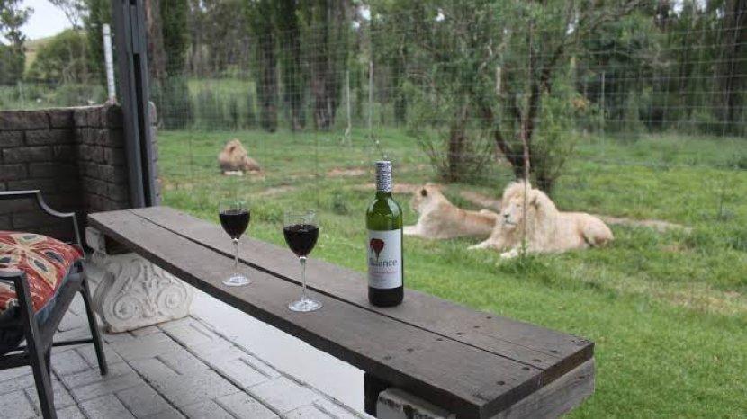 the-lion-house.jpg