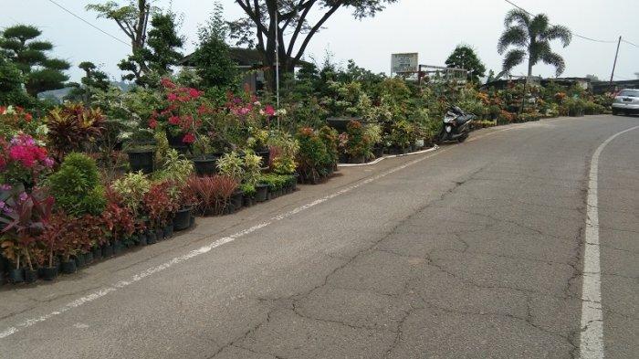 Menikmati Wisata Bunga Bangun Sari di Tanjung Morawa Kabupaten Deli Serdang