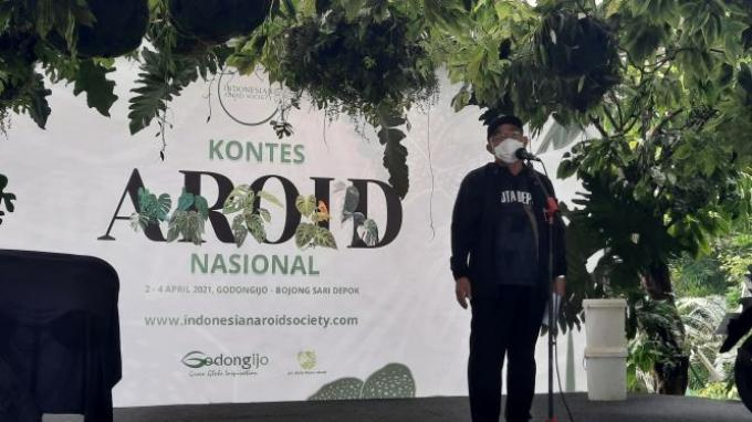 Tanaman dalam 400 Pot Diikutkan dalam KontesAroid Nasional 2021di Godongijo Depok Jawa Barat