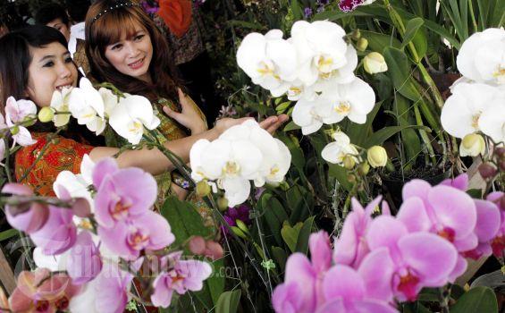 6 Jenis Bunga dan Maknanya dalam Hubungan