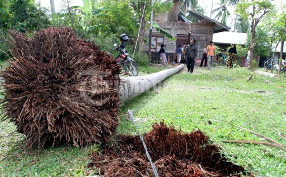 Sedang Rihat di Gubuk, Nek Mala Tewas Tertimpa Pohon Kelapa