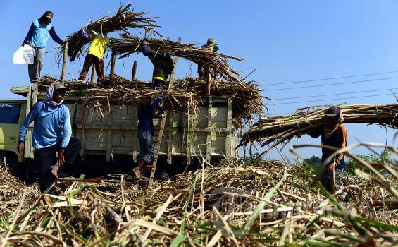 Pemerintah Setengah Hati Merevitalisasi Pabrik Gula