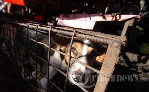 500 Ekor Anjing Diperkirakan Masuk Kota Solo per Bulan secara Ilegal, Awas Bahaya Rabies