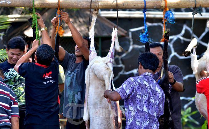 MENGIRIS KULIT:  Sejumlah warga mengiris kulit kambing kurban yang akan dibagikan kepada warga dalam rangka memperingati Hari Raya Idul Adha 1434 H, di sekitar Gedung Pakuan, Bandung, Selasa (15/10). (TRIBUN JABAR/DENI DENASWARA)