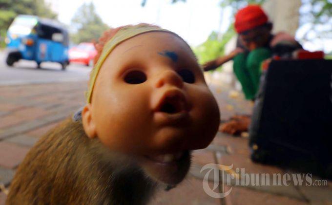 Jokowi Tertibkan Topeng Monyet Pekan Ini