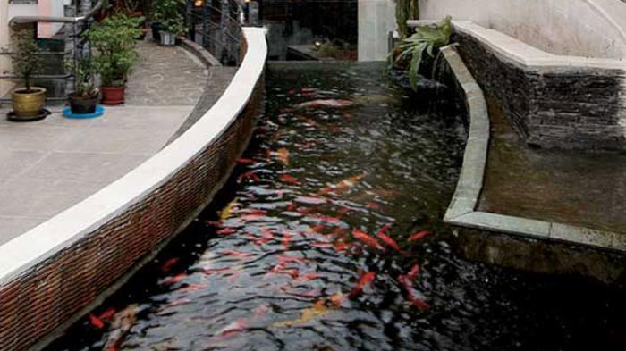 Agar Kolam Ikan Tak Mudah Keruh Airnya Selalu Jernih Tribunnews Com Mobile