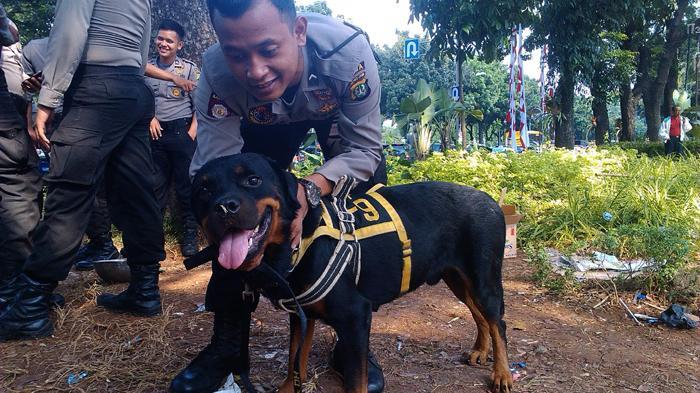 Whyski Anjing Rottweiler Pengendali Amuk Massa Di Mk Tribunnews Com Mobile