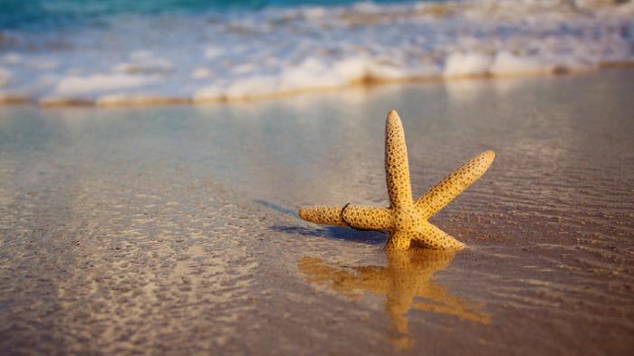 Jangan Gunakan Pasir Pantai Untuk Bangun Rumah, Ini Alasannya