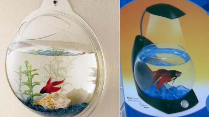 Mata Sedap Memandang Akuarium Mini Ikan Cupang Tribunnews Com